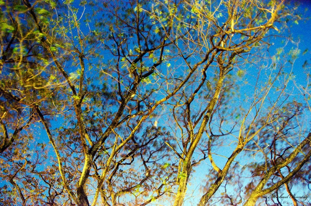 Tree Branches, Park, Paranaque