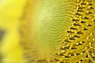 Sunflower, Paranaque, Metro Manila.