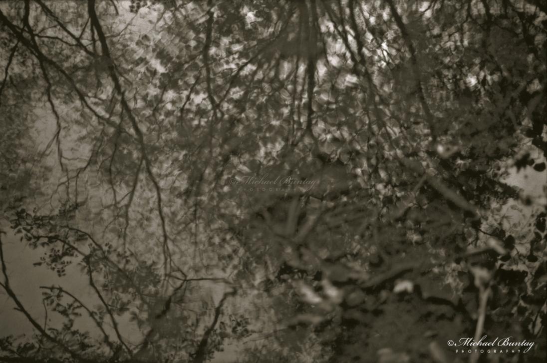 Robert E. Lee Park, Baltimore County. Ilford Delta 400 35mm BW negative film.